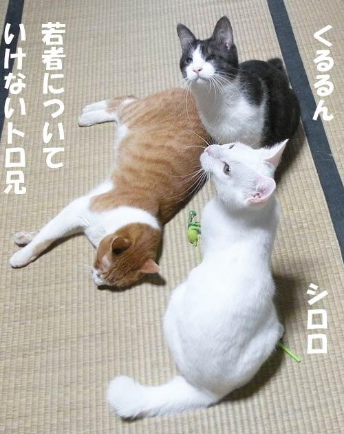 猫 アフター