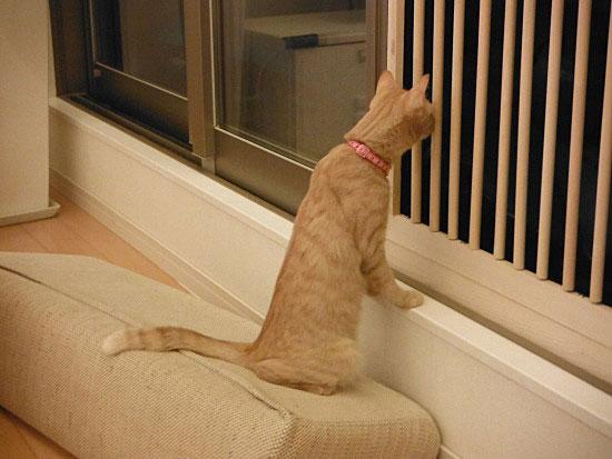 猫 脱走対策