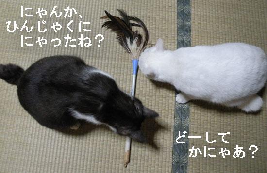 猫とハタキ