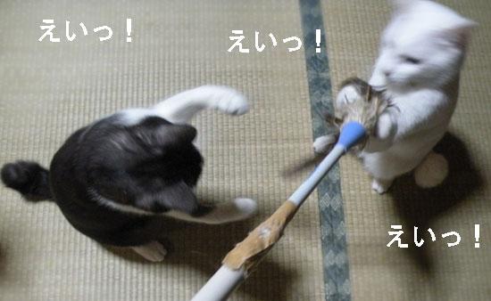 猫 ハタキ