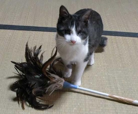 猫的ビフォーアフター
