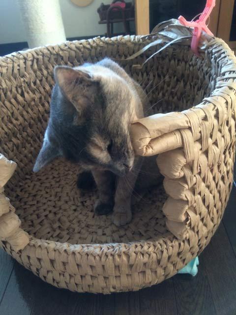 猫ちぐら 猫つぐら 手作り 自作