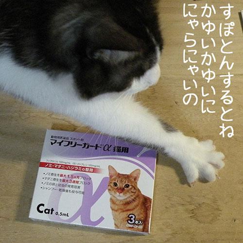 猫 マイフリーガード