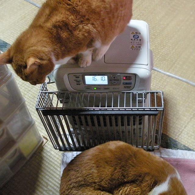 猫とヒーター