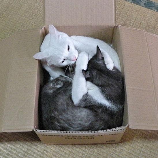 箱に入った猫達