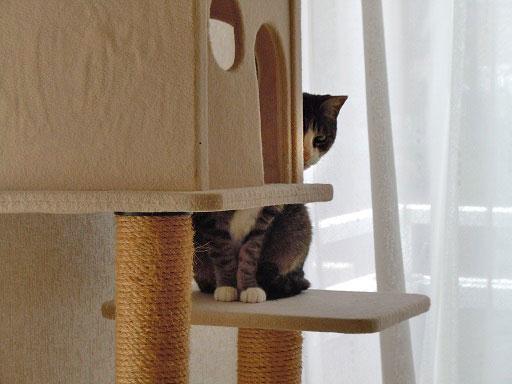 タワーの後ろから除く猫