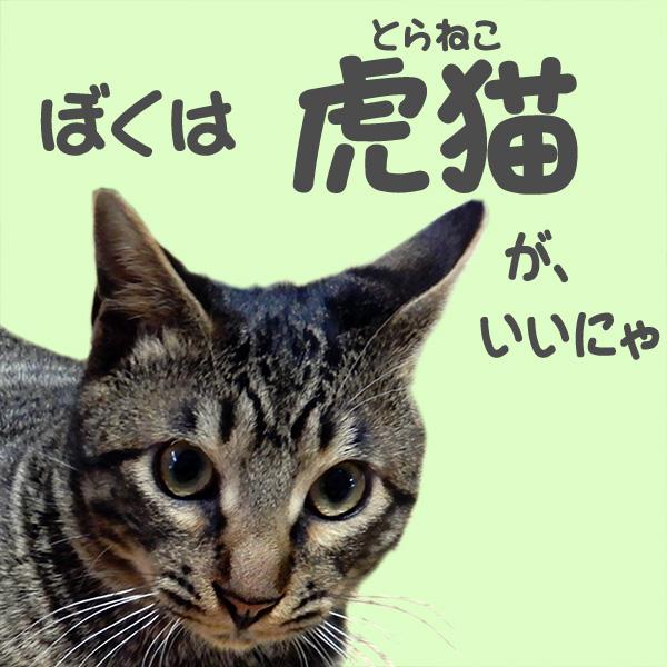 猫たちが新元号を考える