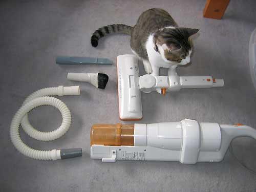 猫と掃除機と排水ホース