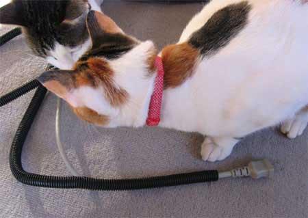 猫とコードカバー