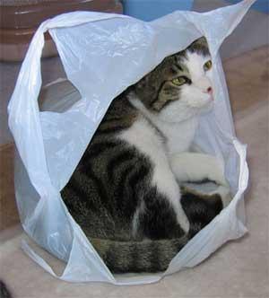 猫は袋が好き