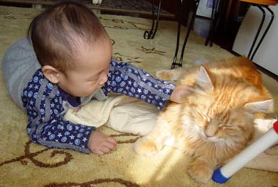 猫と赤ちゃん