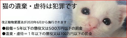 猫の里親募集と緊急SOS