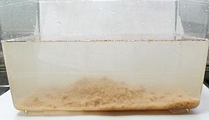 トイレに流せる木製猫砂