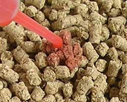 四万十檜の猫砂