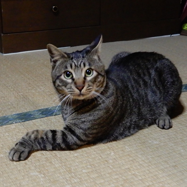 猫の虎太郎