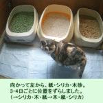 猫トイレ3つ