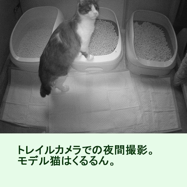 猫トイレ3つの夜間撮影映像