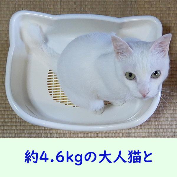 デオトイレ 子猫から体重5kgの成猫用 大人猫と