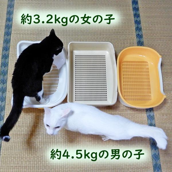 ウィークリートイレ・デオトイレ子猫・ニャンとも清潔トイレ子ねこ