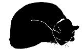 lay8 猫シルエット Cat Silhouette