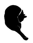 wash9 猫シルエット Cat Silhouette
