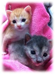赤ちゃん猫時代のチョコちゃんとマロンちゃん
