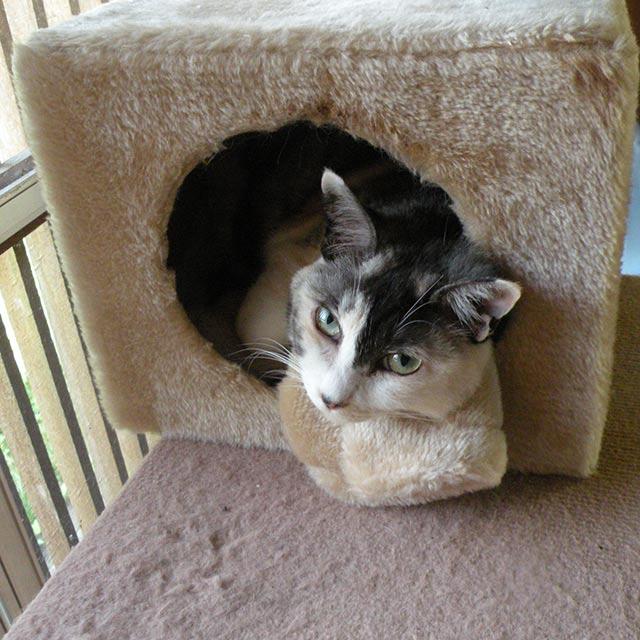 キャットタワーのハウスにはいる猫