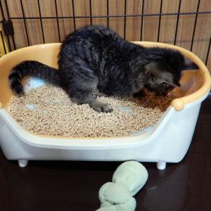 子猫と小型トイレ