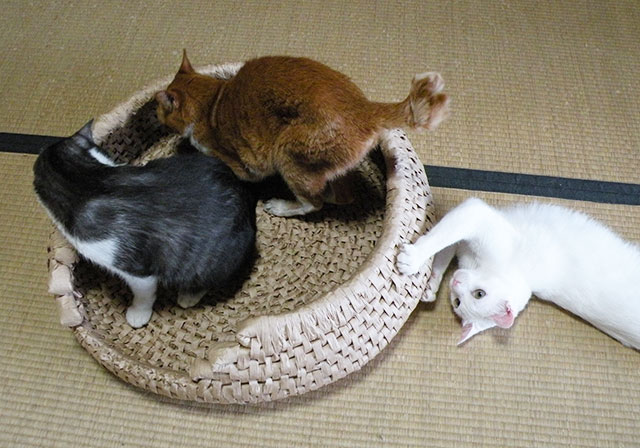 猫ちぐらベッド