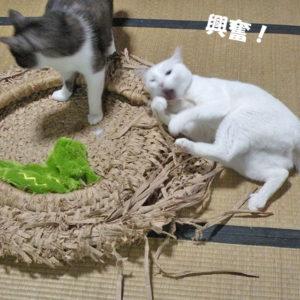 猫、破壊中