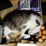 マウスパッドの上に寝る猫