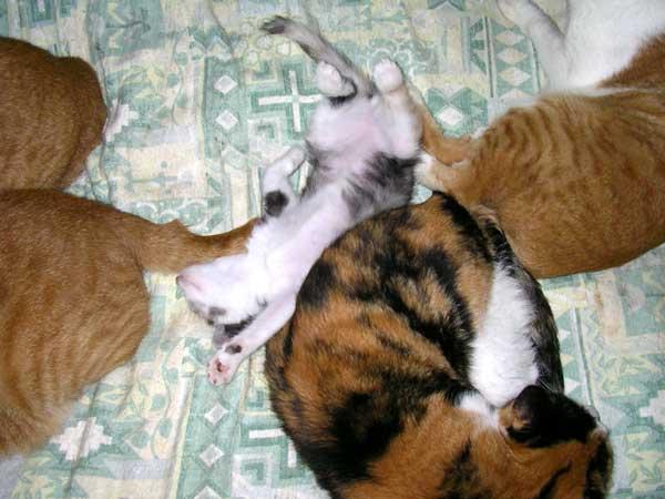 大人猫に囲まれて安心そうな子猫