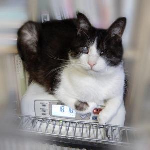 ストーブに乗る猫
