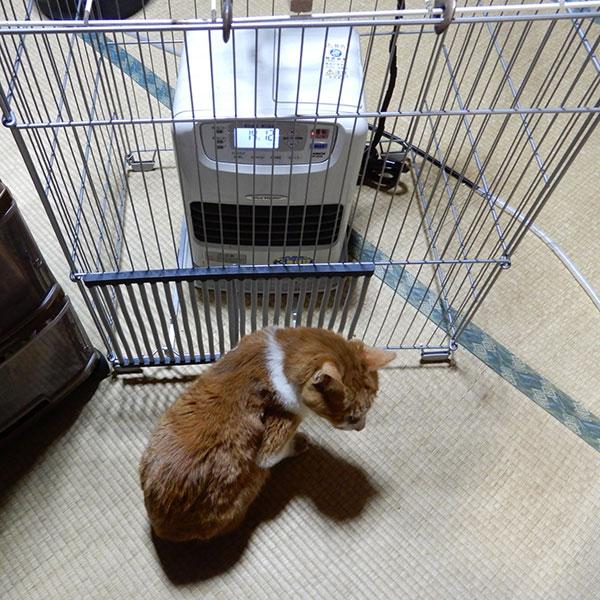 ファンヒーターガードと猫
