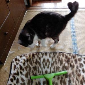 ハート型の尻尾の猫