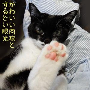 肉球をみせる猫