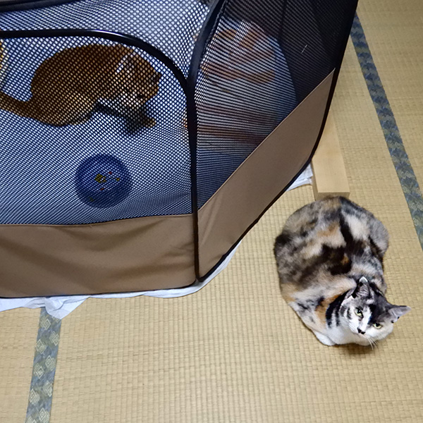 猫とソフトケージ