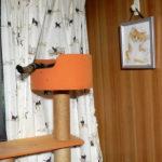 キャットタワーから足を出して寝ている猫