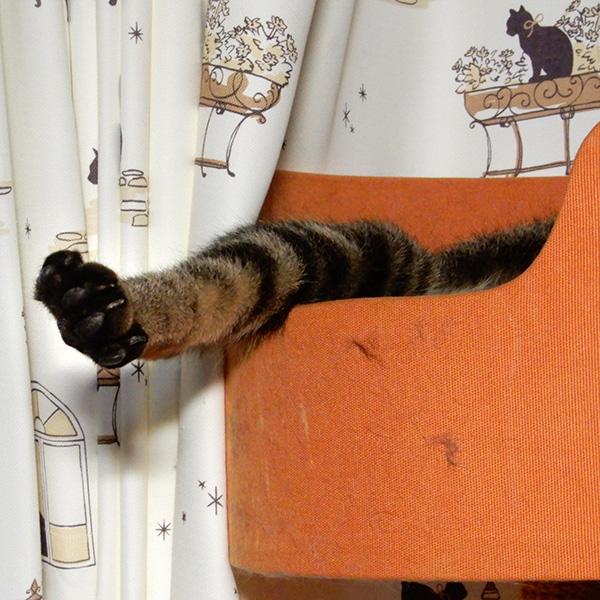 キャットタワーから足をだして寝る猫