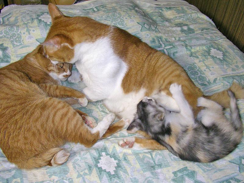 茶トラ猫2ニャンと三毛猫の子猫