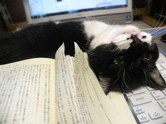 本を食い破る猫