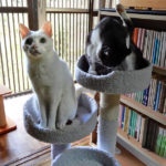 猫とミニタワー