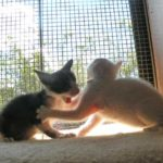 窓辺で遊ぶ子猫たち