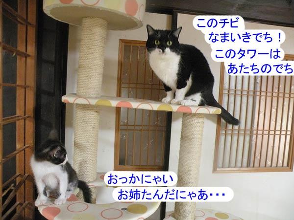 猫達とキャットタワー