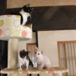 キャットタワーと猫達