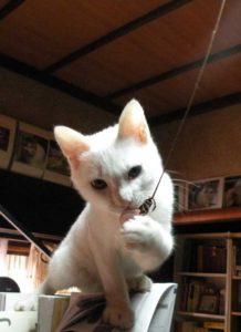 電気のスイッチを引っ張る猫