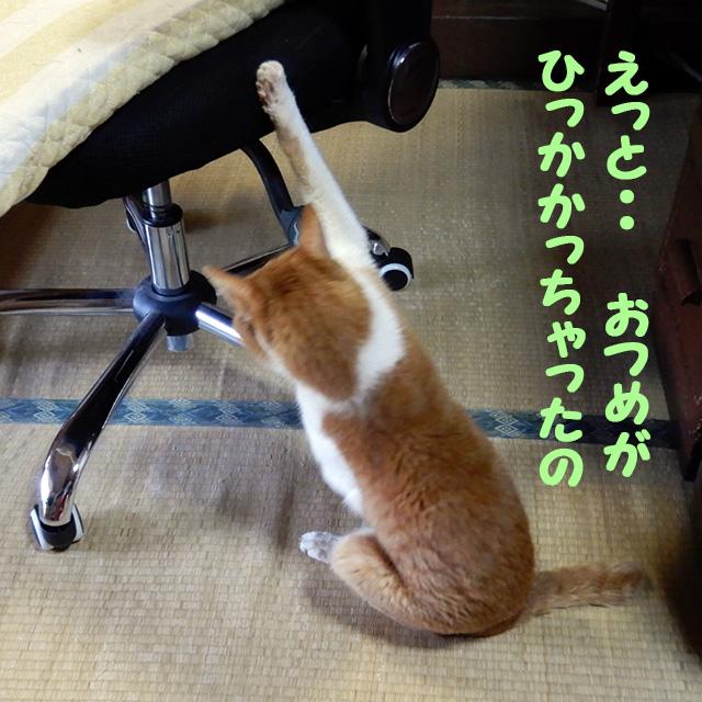 爪が引っかかって困っている猫