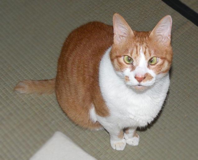 寄り目の猫