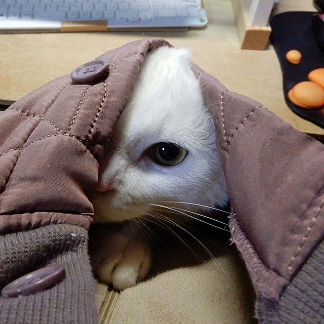 服に潜る猫