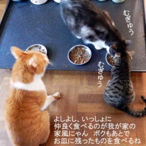 食べる猫達